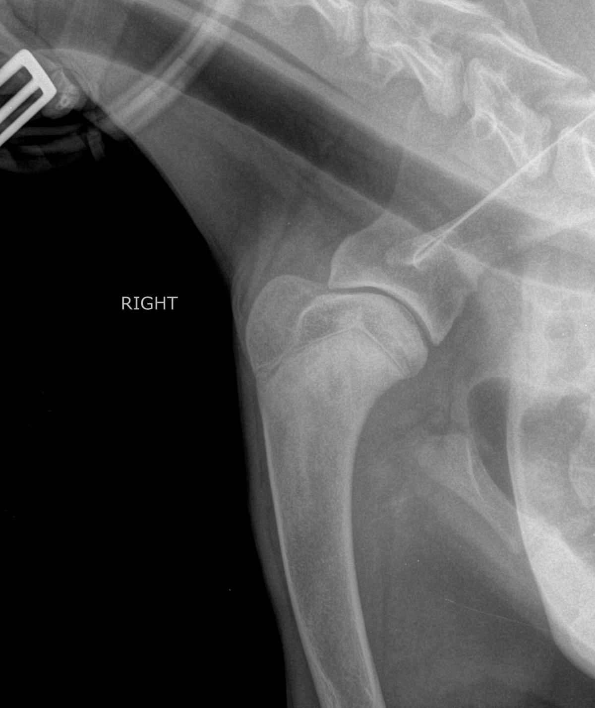 Расслаивающий остеохондрит плечевого сустава у собак растирания при больных суставах