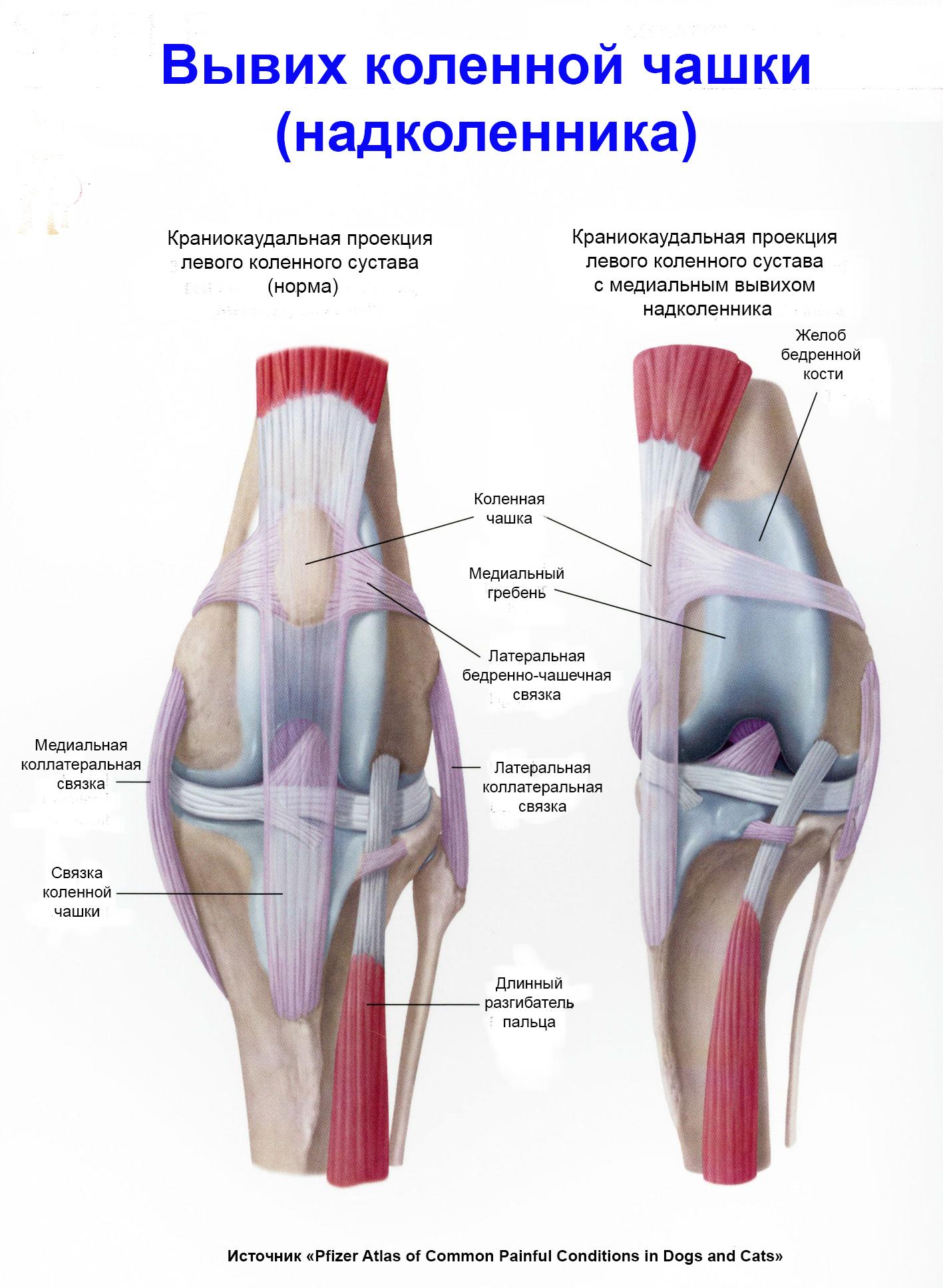 Ветеринарная клиника суставы кости iherb для суставов отзывы