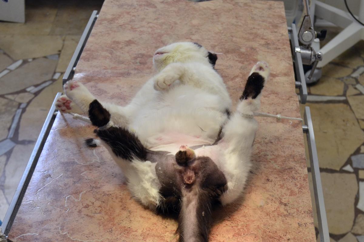 Как лечить мочекаменную болезнь у котов в