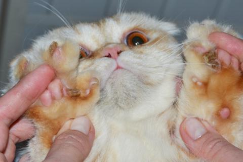 Болезни кожи у котенка